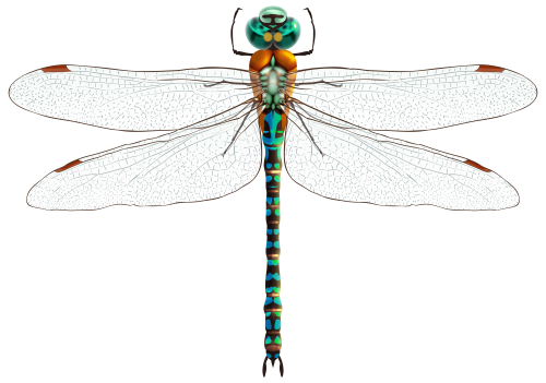 Drawing bugs dragonfly. Png clip art butterfly