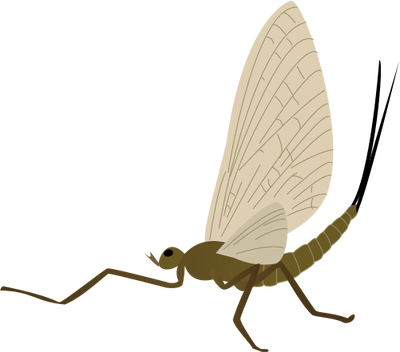 Drawing bugs mayfly. Adult insects arachnids vector