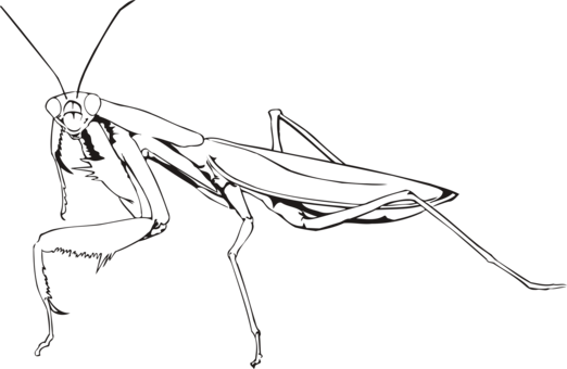 Drawing insects praying mantis. Computer icons download insect