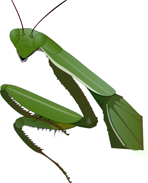 Drawing insects praying mantis. Head clipart free google