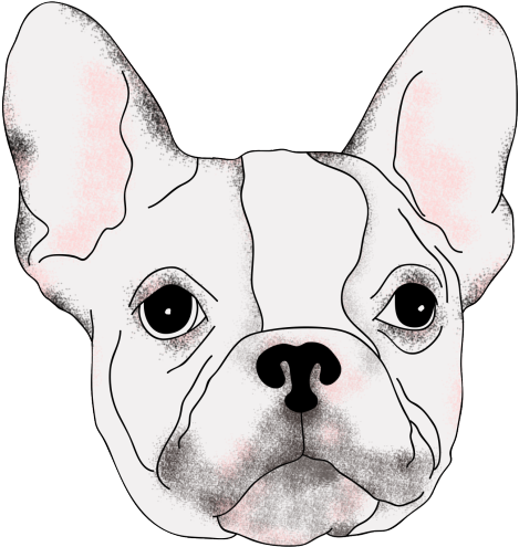 Terrier drawing french bulldog. Download bulldogs realistic png