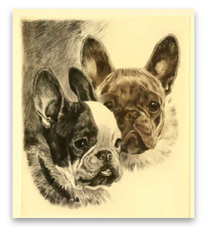 Terrier drawing french bulldog. Training books for sale