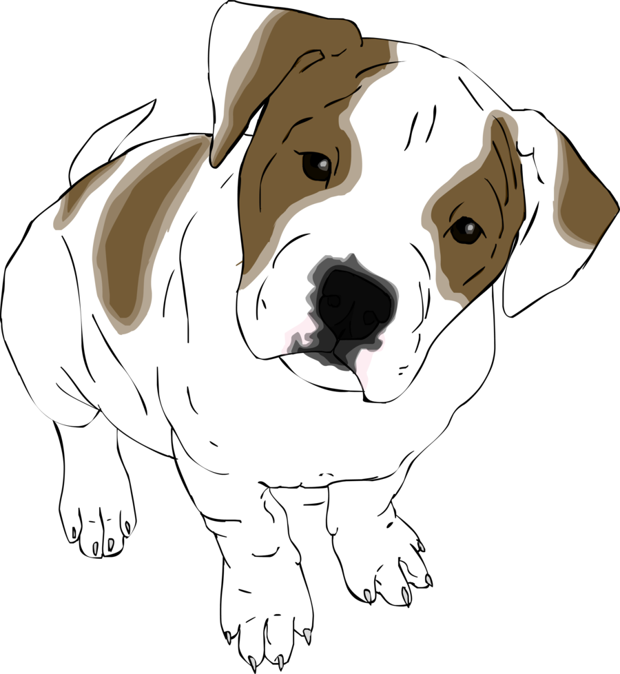 American at getdrawings com. Drawing bulldogs english bulldog clip free library