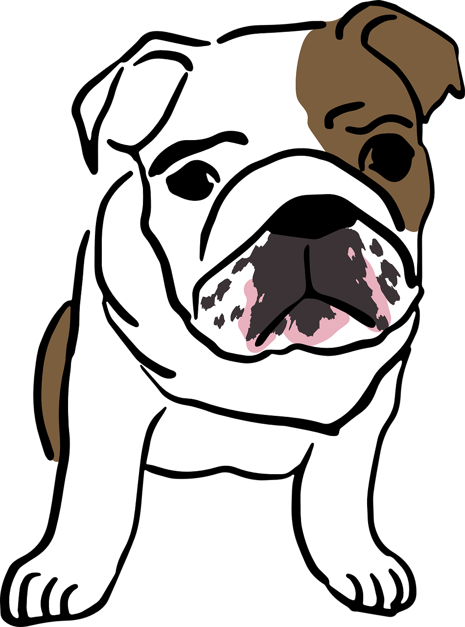 Dog english baby mammal. Drawing bulldogs bulldog pup clipart free library