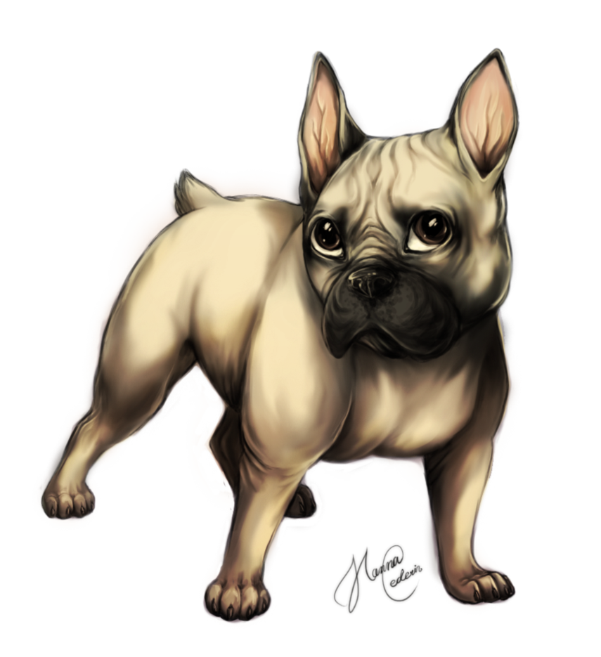 French drawing bulldog. By cederin on deviantart