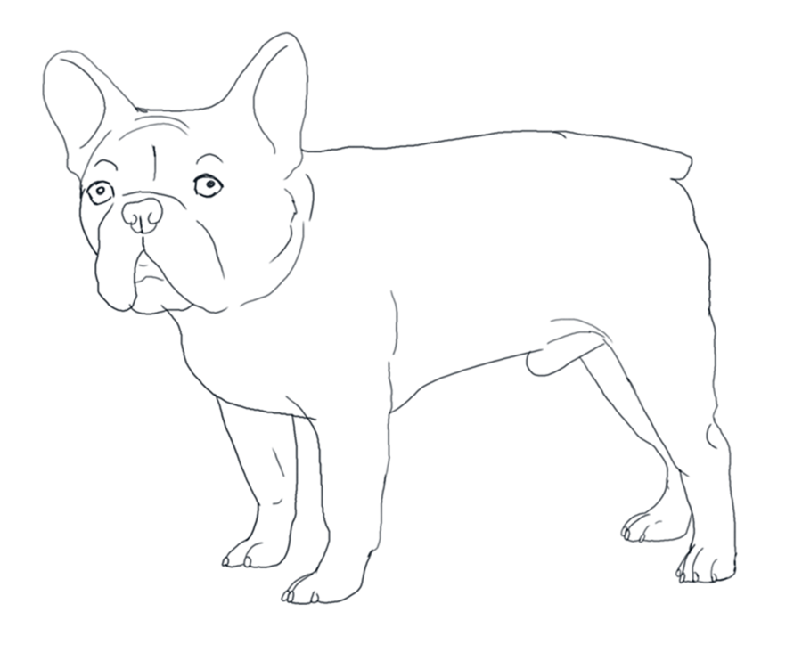 French drawing bulldog. Lines by valentinekennel on