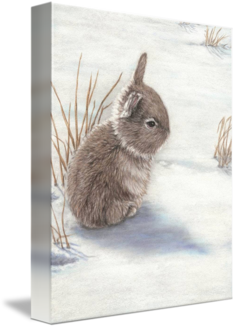 Hares drawing snow hare. Bunny by terry savage