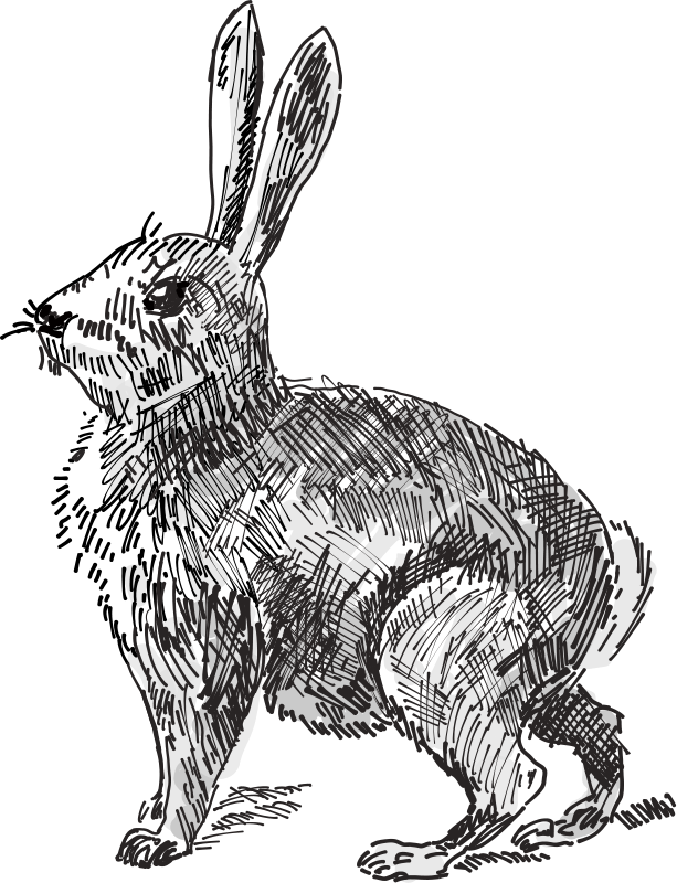 Rabbits drawing skull. Free rabbit outline download