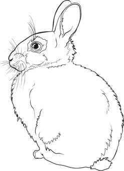 Hares drawing hand drawn. Easter bunny hare domestic
