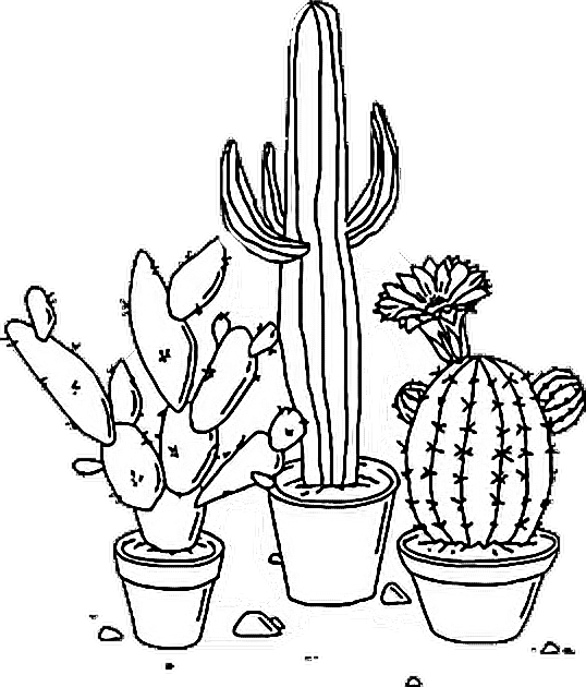 Drawing cactus. Aesthetic