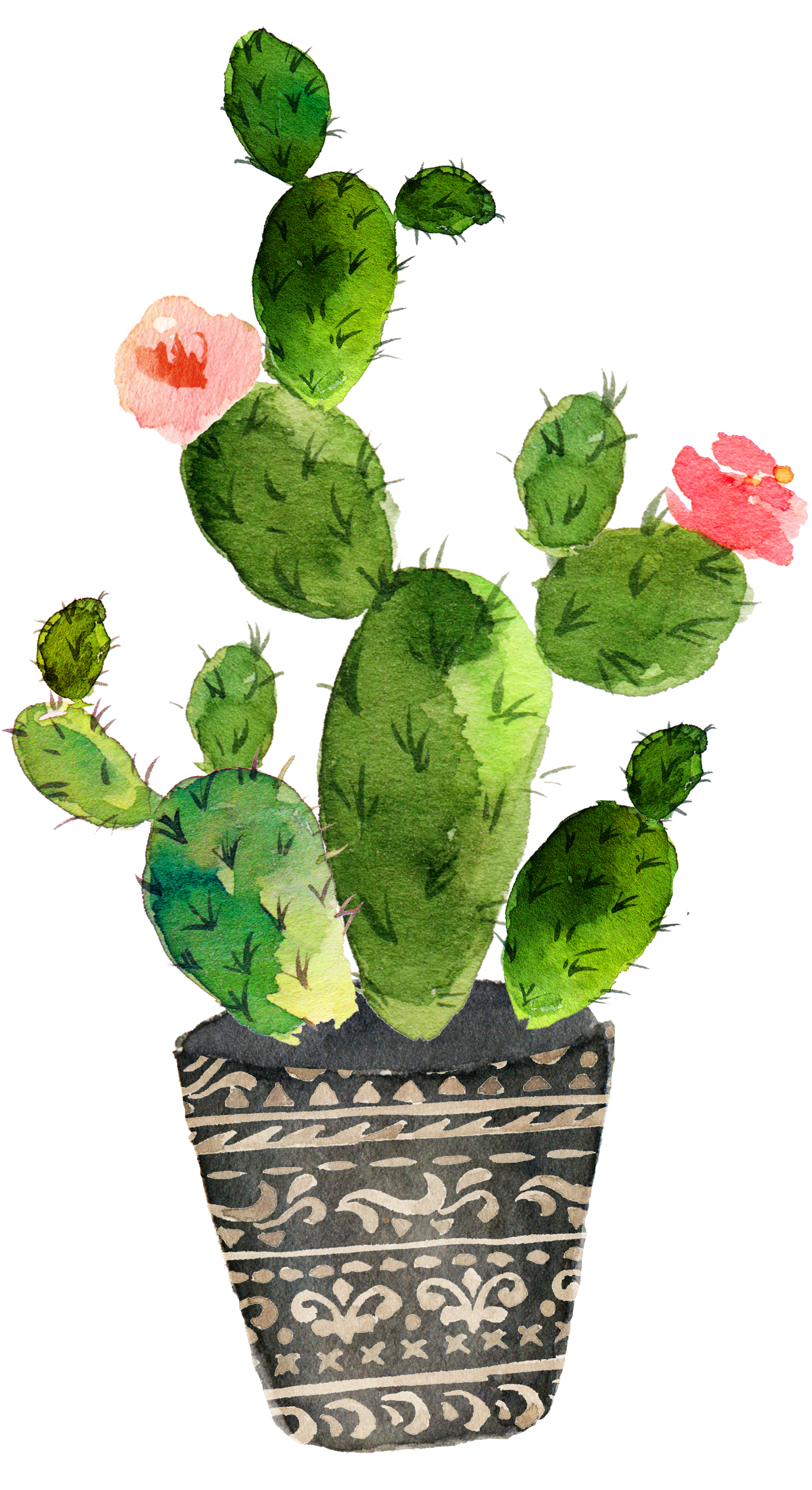 Drawing cactus prickly pear. Cactaceae watercolor painting art