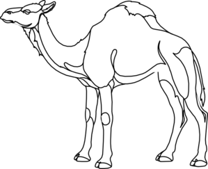 Drawing camels. Camel outline at getdrawings