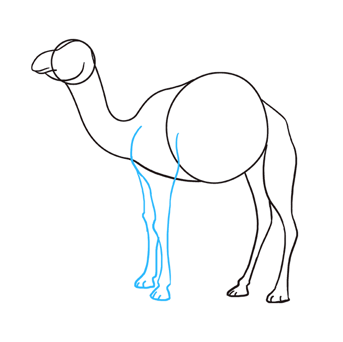 Drawing camels art. How to draw a