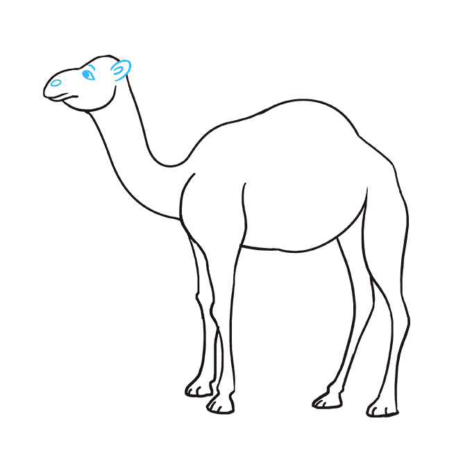 How to draw a. Drawing camels cartoon image transparent stock
