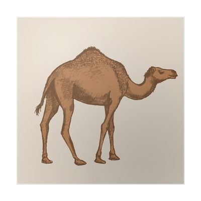 Drawing camels. Abstract huge freebie