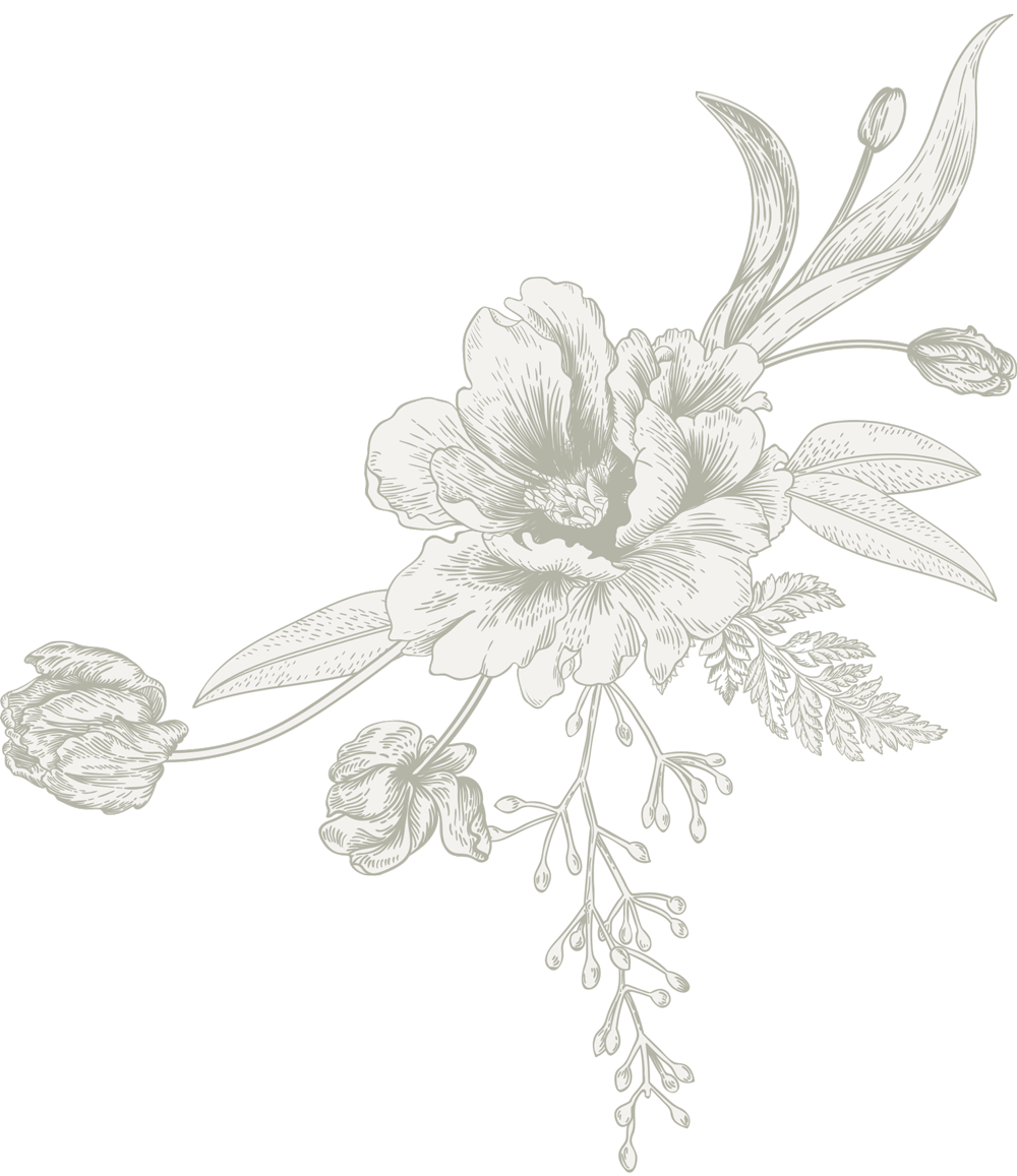 Chanel drawing flower. Helianthus about