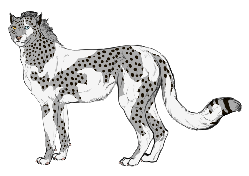 Cheetahs drawing body. Piebald appaloosa by shedumaster