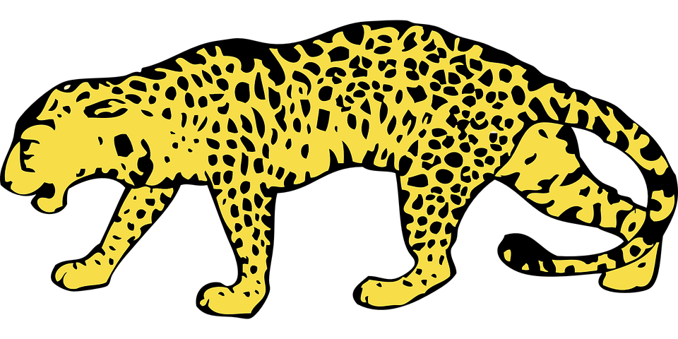 Drawing chinese leopard. Amur north snow cheetah