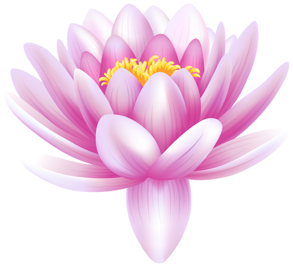Enlightenment drawing water flower. Lily transparent png clip