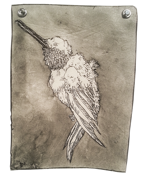 Drawing compositions bird. Colabs heather m foster