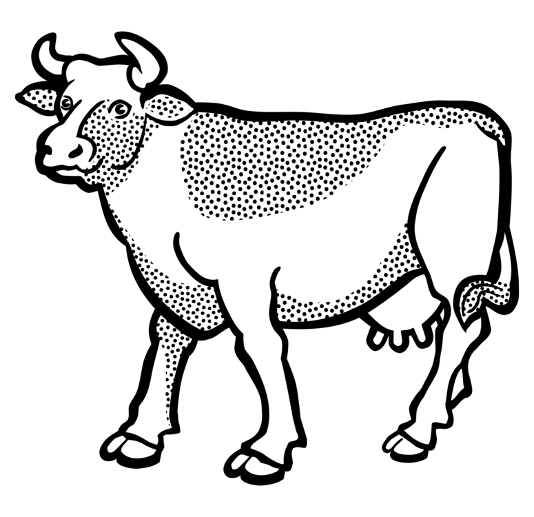 Drawing cow. English longhorn texas line