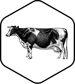 Drawing cow branding. Strategy melbourne develop