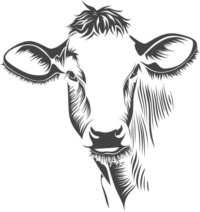 Drawing cow face. At getdrawings com free