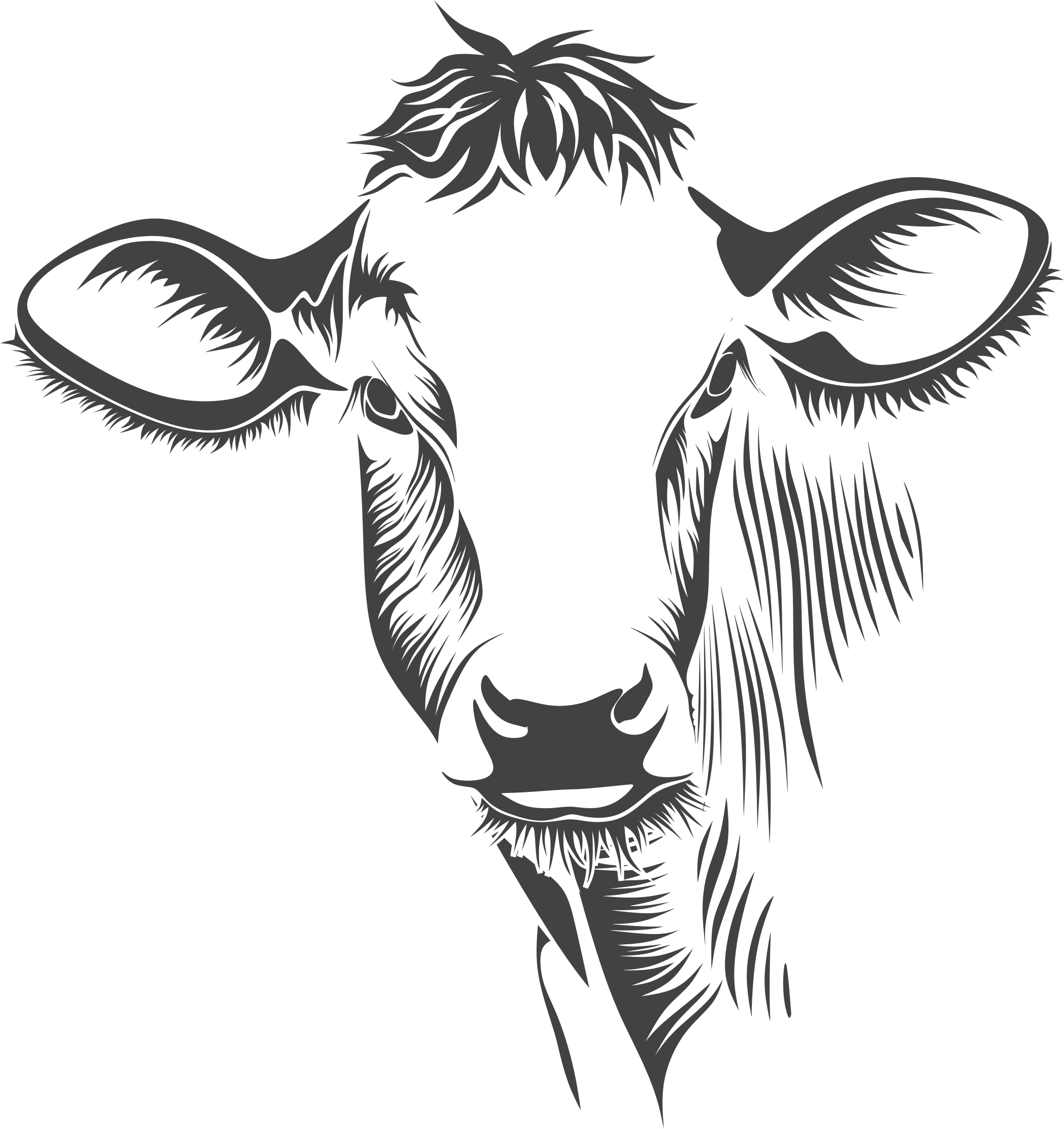 Drawing cow line. Clipart detailed art big
