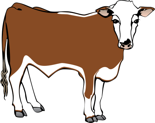 Cattle vector male cow. Collection of steer
