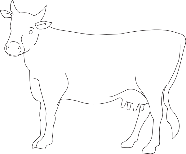 Vector bull side view. Cow outline drawing photo