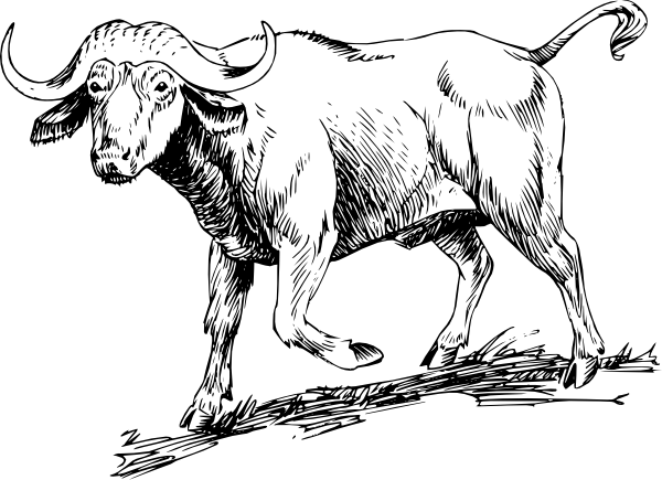 Drawing cow walking. Buffalo clip art at