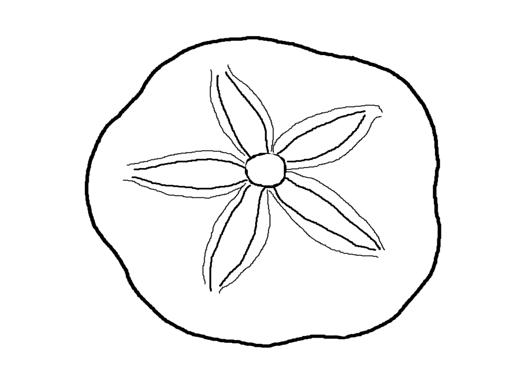 Drawing shell sea. How to draw a