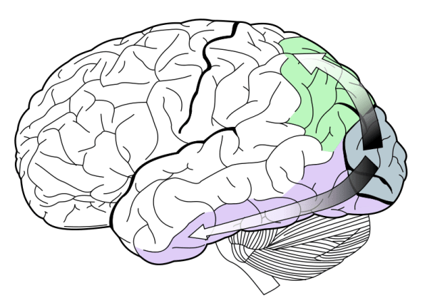 Drawing creatively brain. Why we re more
