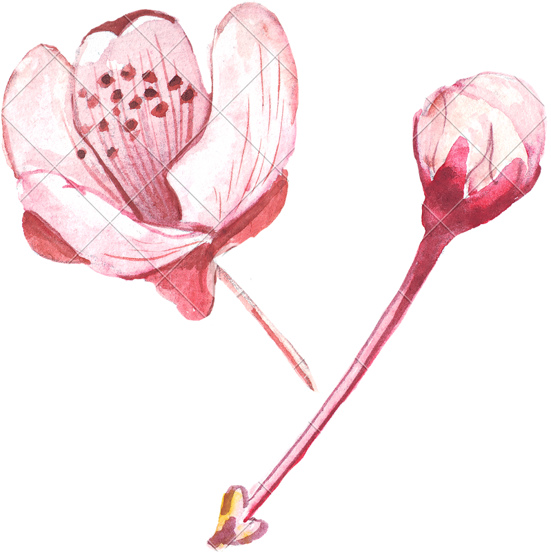Drawing wallpapers watercolor. Hand of pink flower