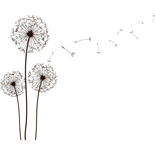 Drawing dandelion cartoon. Collection of png