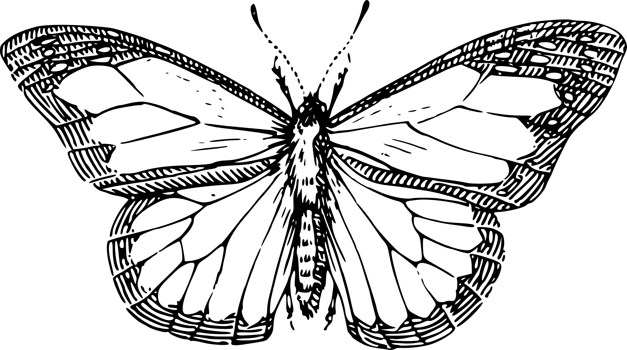 Drawing insects butterfly. Black and white cliparts