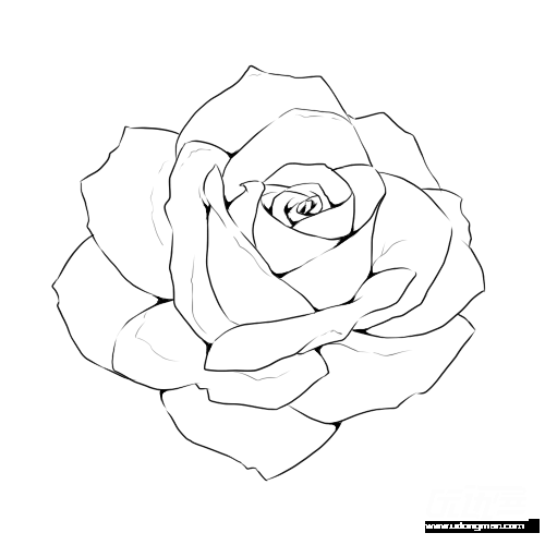 Line template flower flowers. Etching drawing rose graphic black and white library