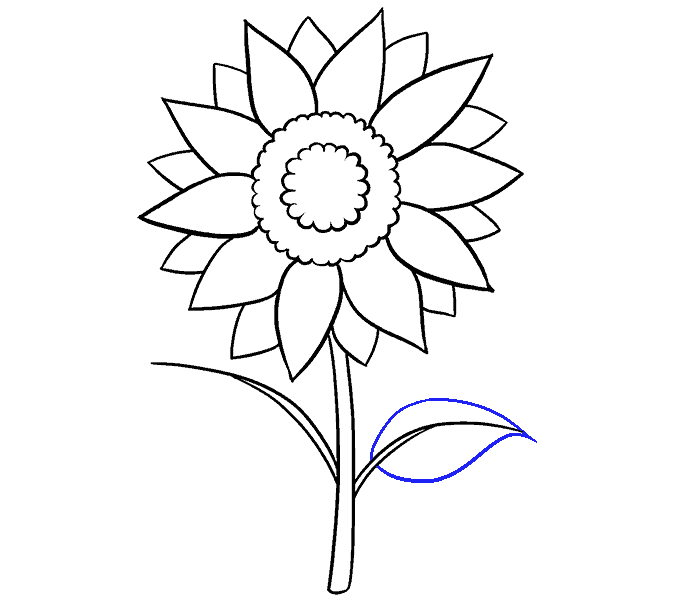 Drawing wall flower. How to draw a