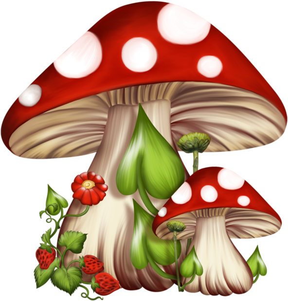 Drawing shrooms basic. Download hd black and