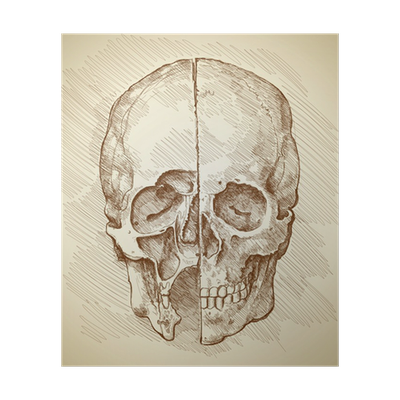 Drawing device da vinci. Skull section based on