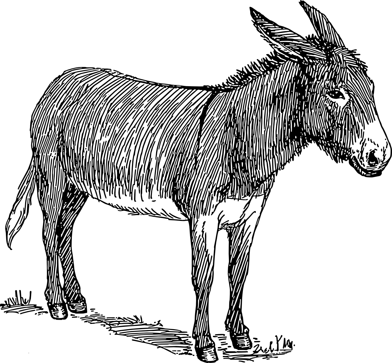Drawing donkey colouring. Travels with a kriscinda