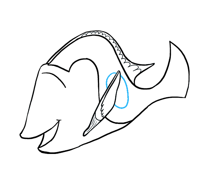 Drawing dory. How to draw in