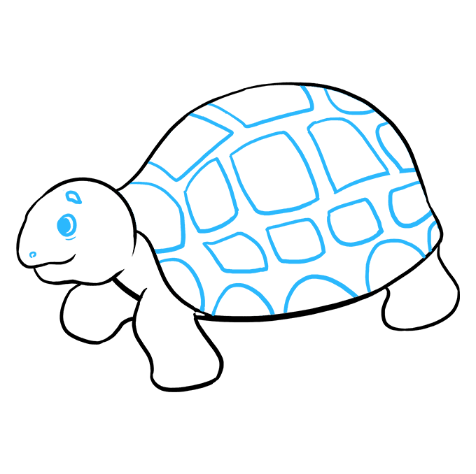 Drawing nemo sea turtle. How to draw a