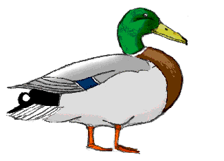 Drawing ducks. How to draw tutorials