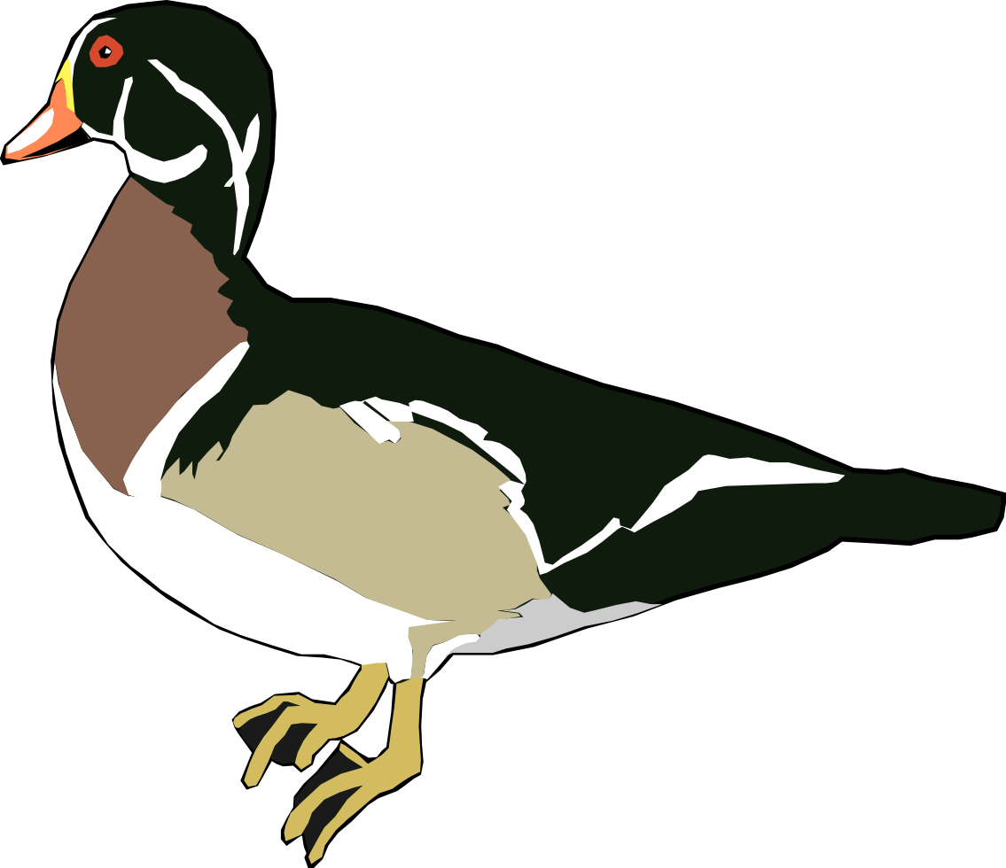 Drawing ducks real. Clipart duck graphics illustrations