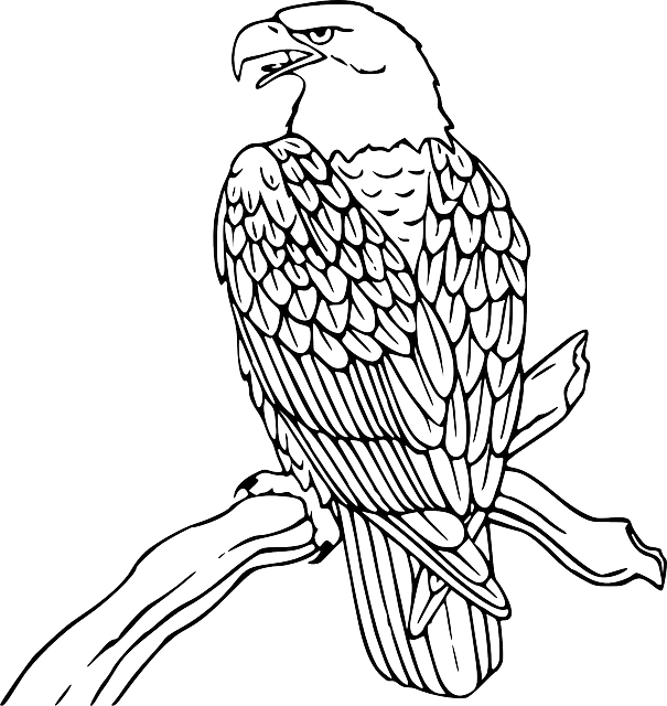 Drawing eagles skeleton