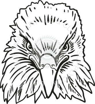 Drawing eagles front face. Collection of eagle