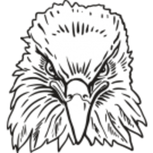 Drawing eagles front face. Eagle free images at