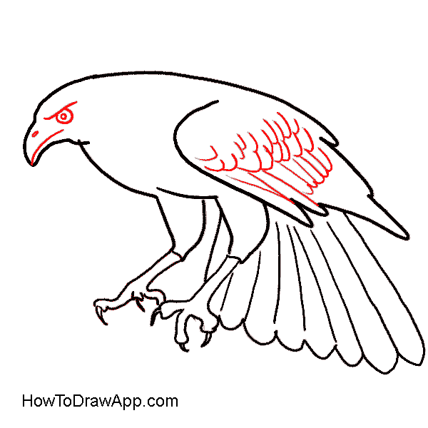 Drawing eagles full body. How to draw an