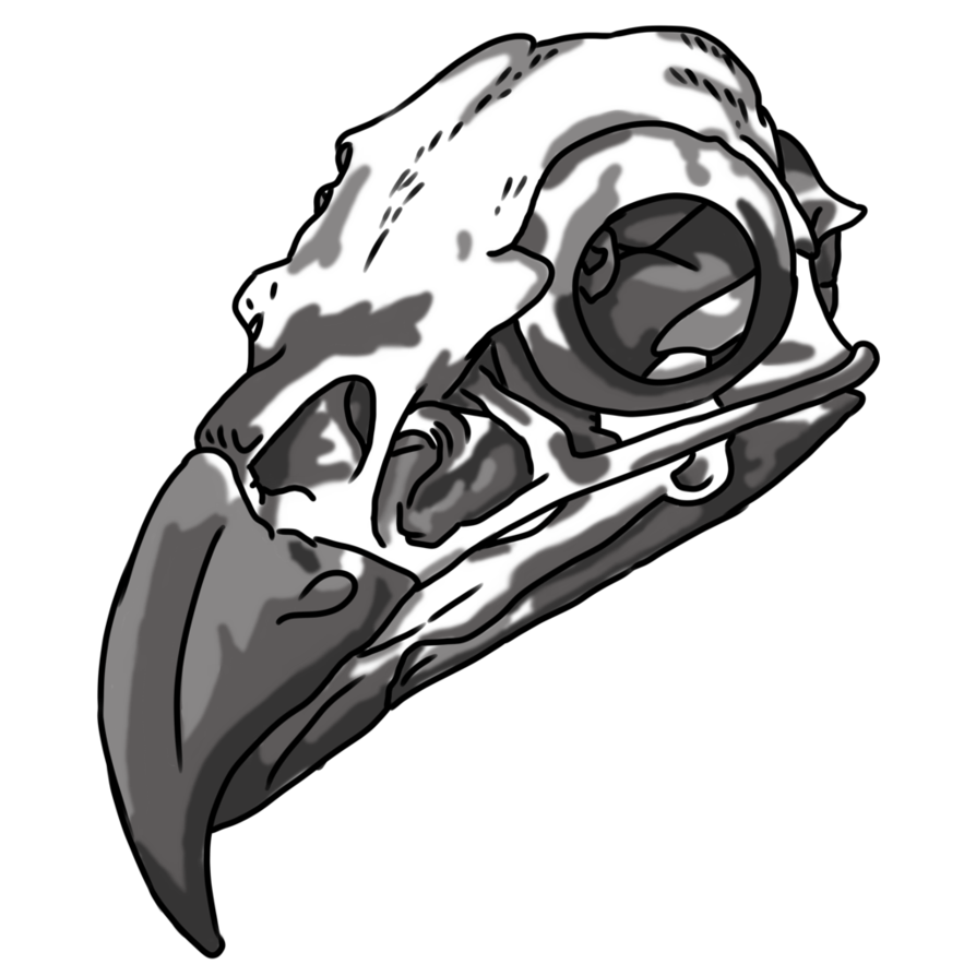 Drawing eagles skull. Gathering item eagle by